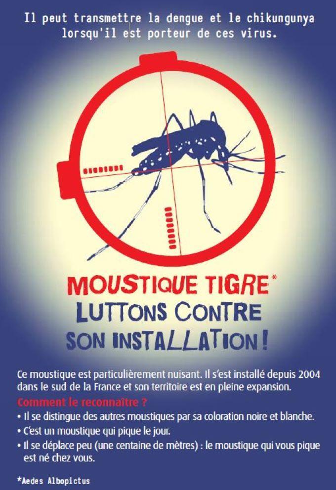 Image de couverture - MOUSTIQUE TIGRE