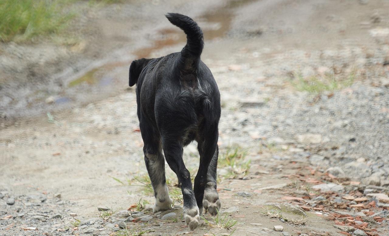 Image de couverture - Rappel : la divagation des chiens est interdite !