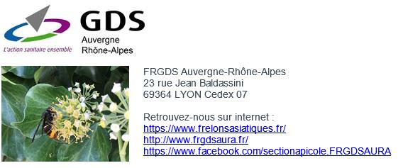 Image de couverture - Frelon asiatique en Auvergne Rhône-Alpes