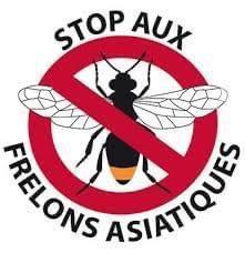 Image de couverture - Lutte contre le frelon asiatique dans le Royans- Vercors