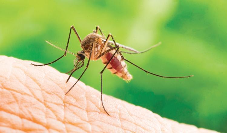Image de couverture - À propos des Moustiques